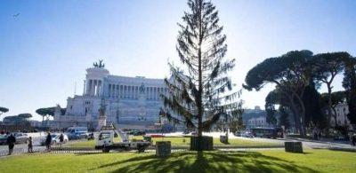 img800-spelacchio--l-albero-pi-sbeffeggiato-sui-social-130194